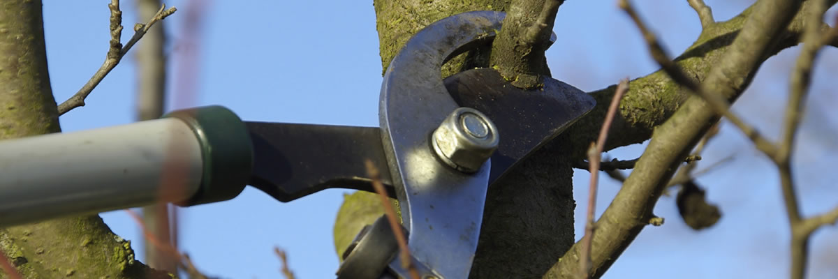 Tree pruning & felling